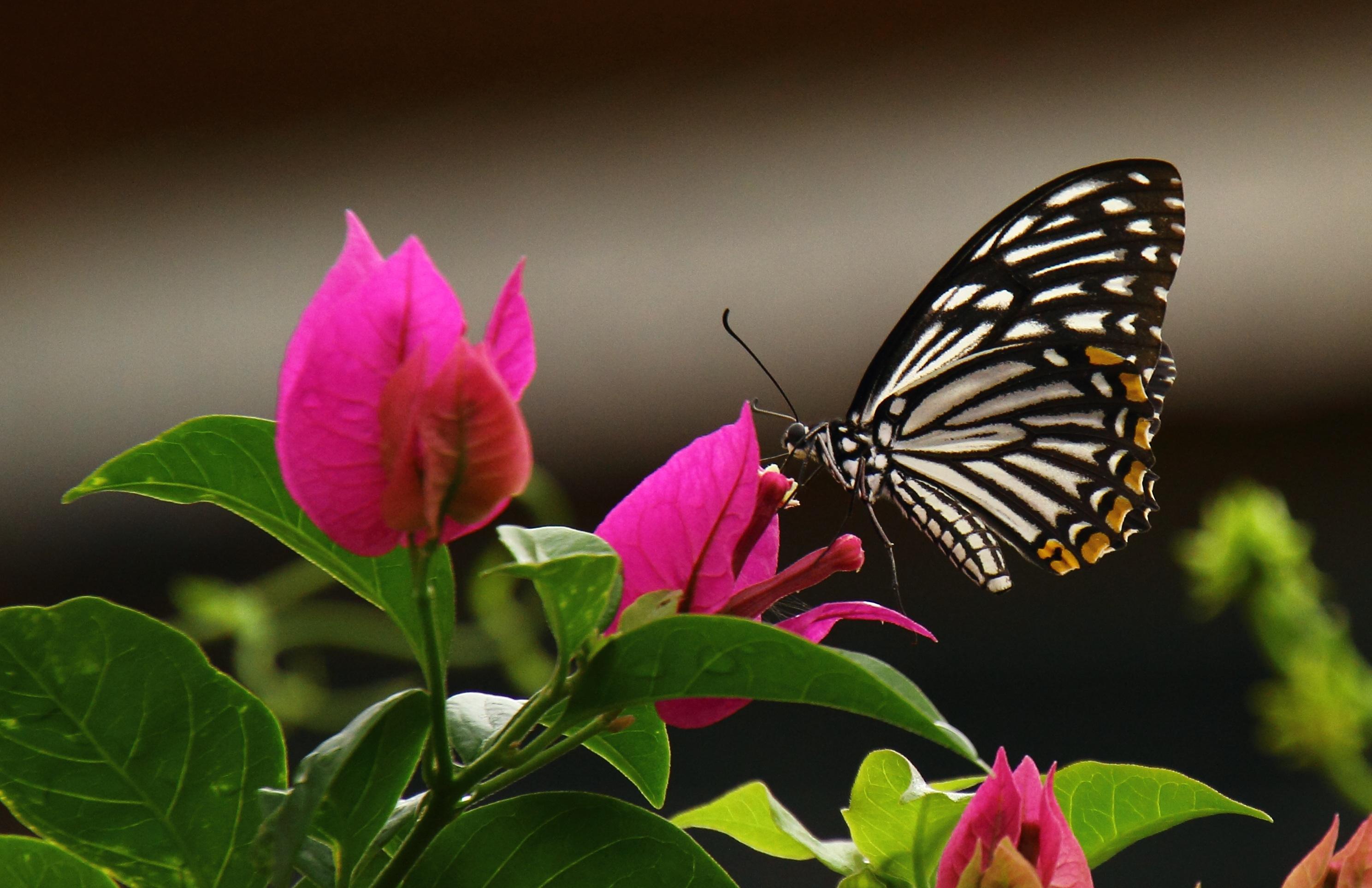 Wallpaper de la semana 56 mariposa en primer plano en for Fotos para fondo escritorio