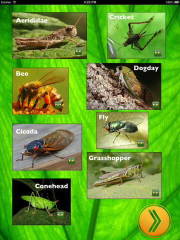 Insect Sounds for iPad