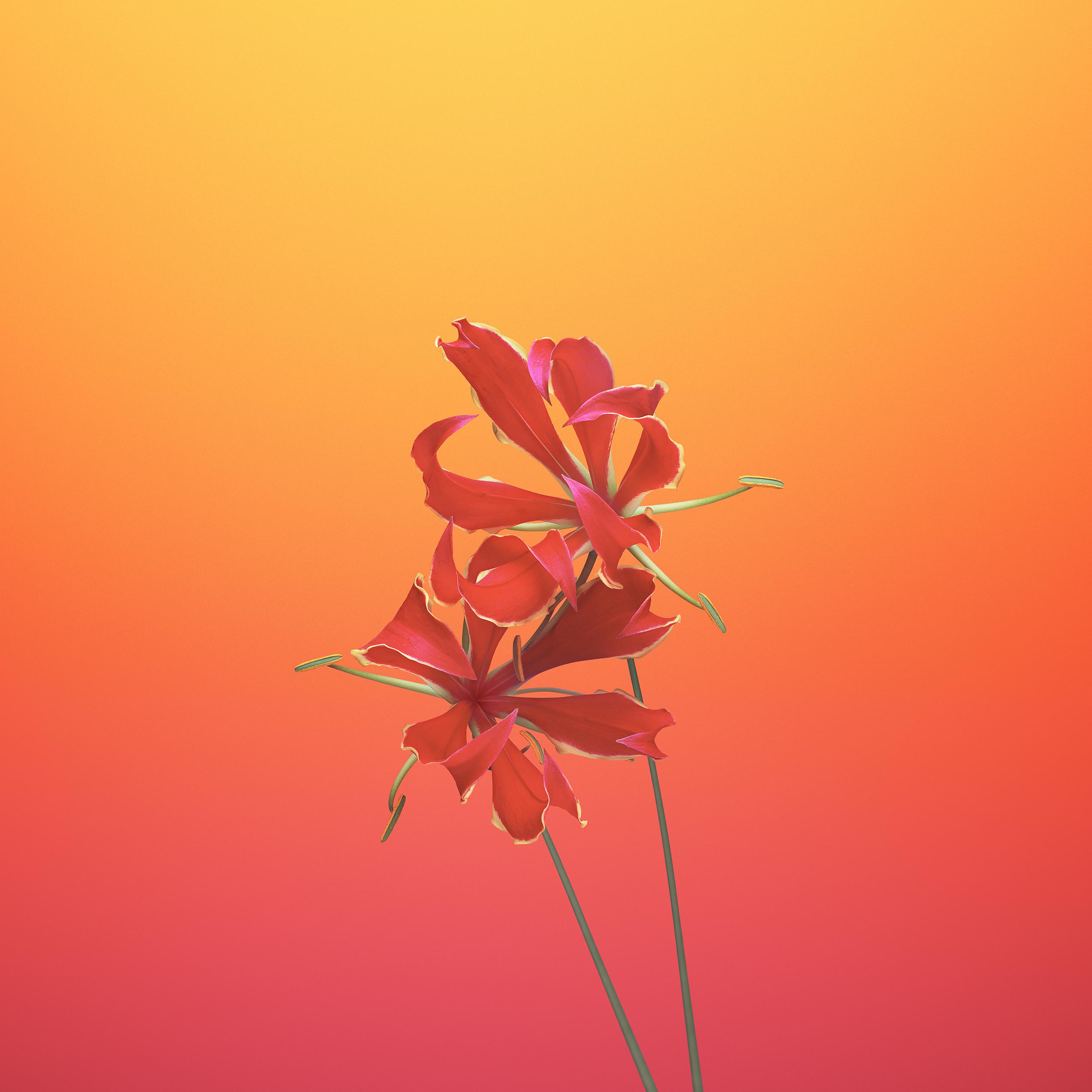 Fondo de pantalla floral de iOS 11