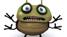 Bug enorme
